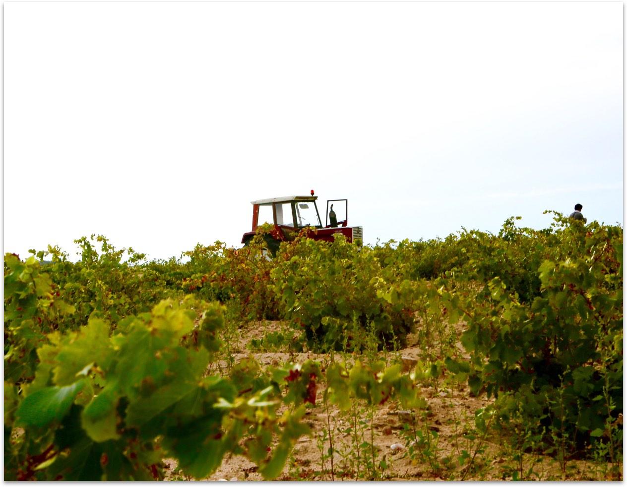 Tractor en Bodegas Camiruaga